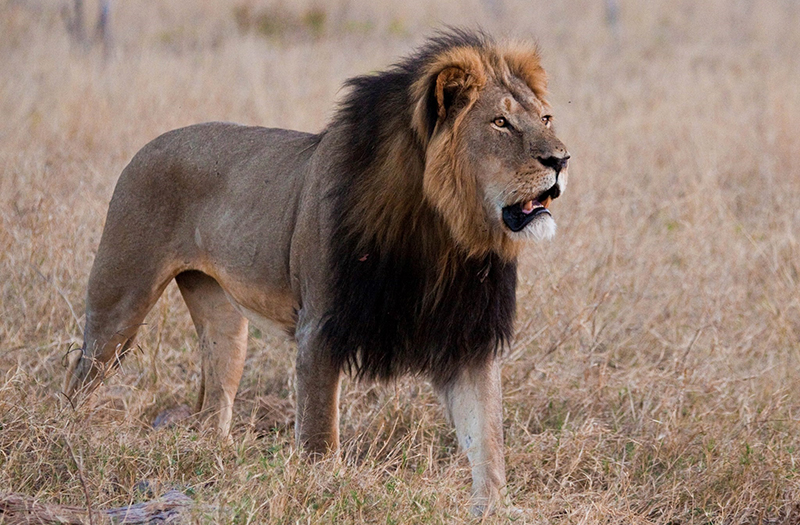 Exclusive Adventures - Africa - The Cecil Journey Continues