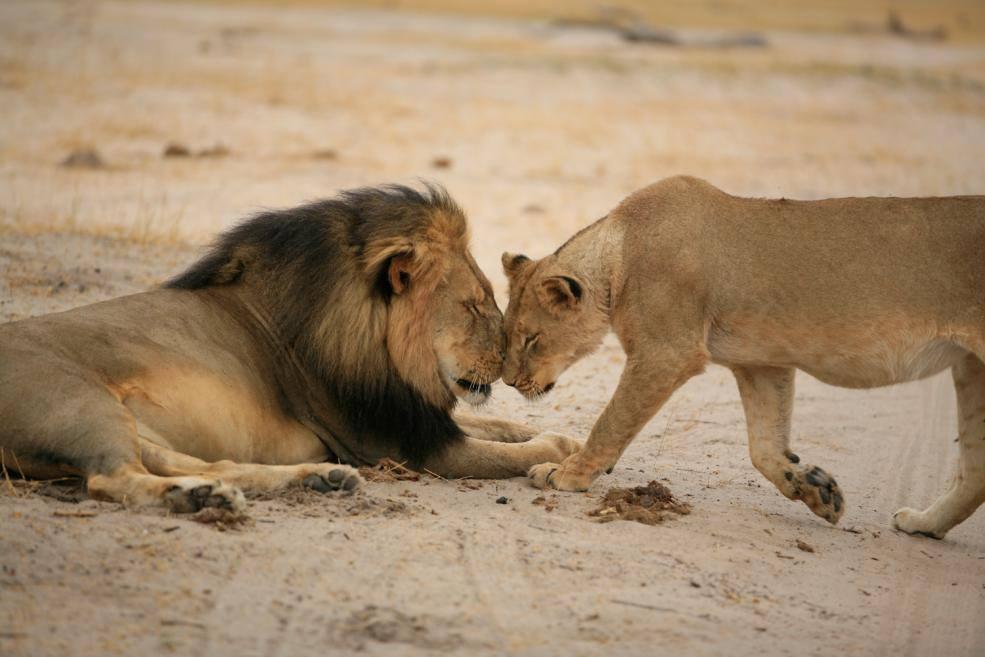 Unforgettable Zimbabwe Safari - Exclusive Adventures - Cecil