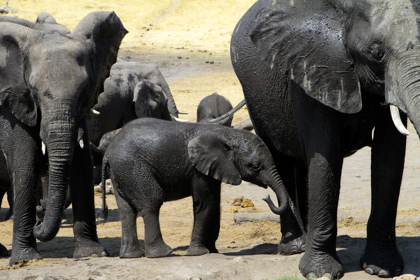 Unforgettable Zimbabwe Safari - Exclusive Adventures - Elephant Camp - Wallow