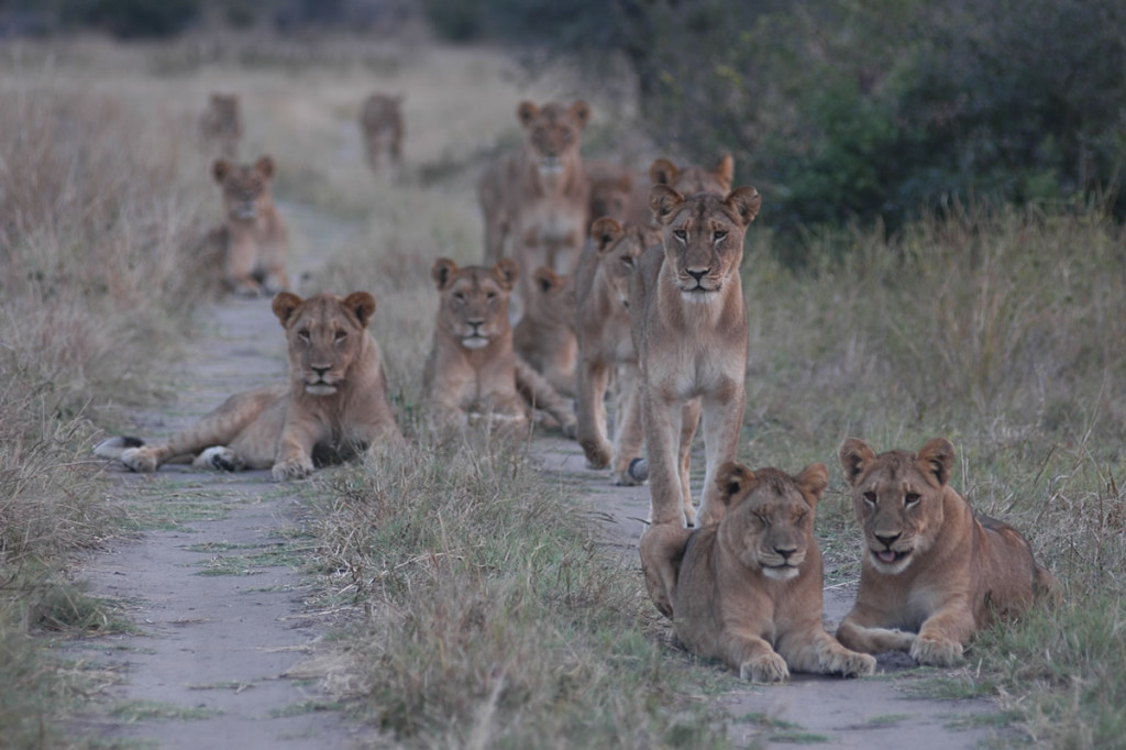 Unforgettable Zimbabwe Safari - Exclusive Adventures - Hwange Park - Cecil Pride