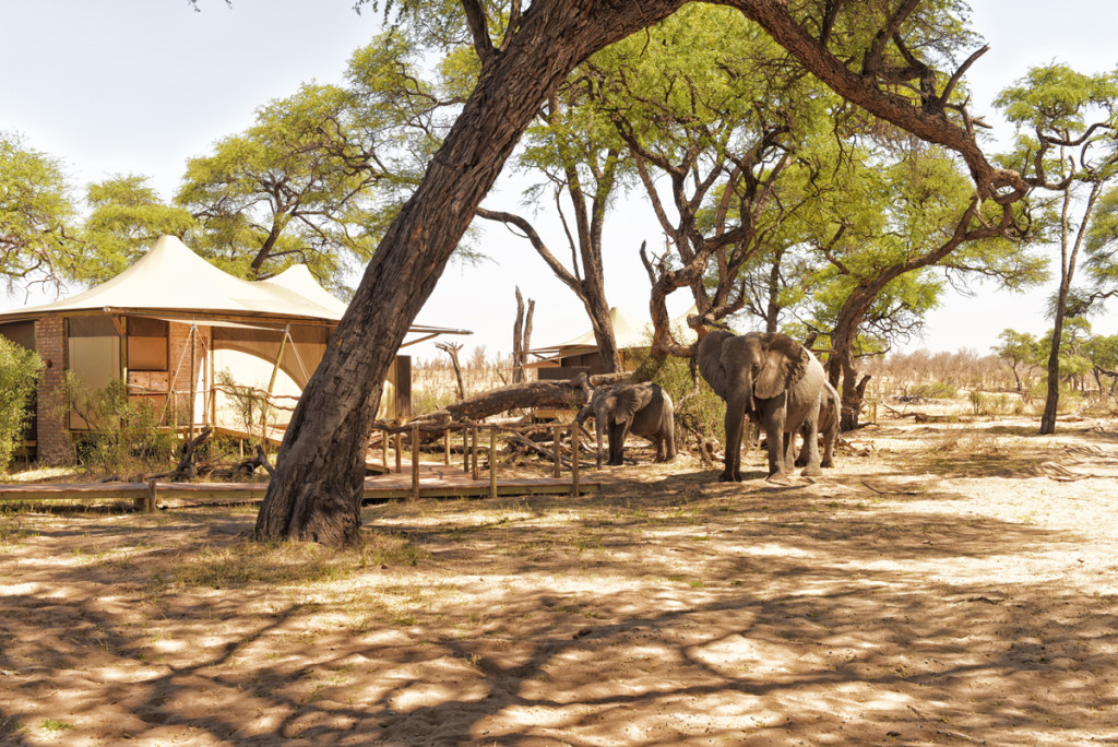 Unforgettable Zimbabwe Safari - Exclusive Adventures - Hwange Park