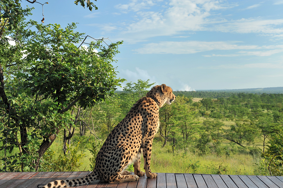 Unforgettable Zimbabwe Safari - Exclusive Adventures - Sylvester