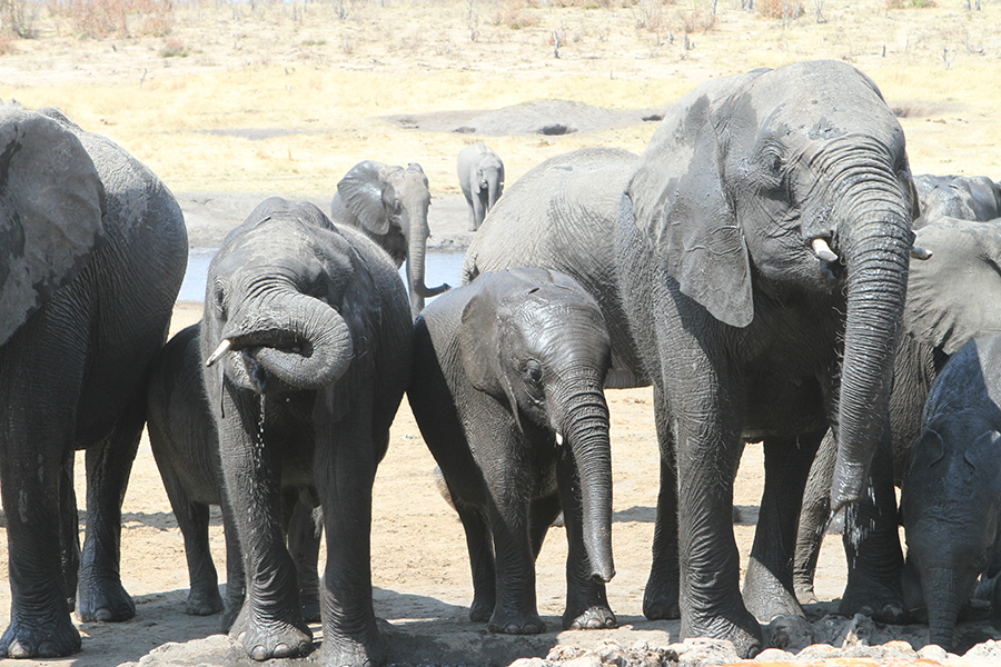 Exclusive Adventures - Elephant Wallow - Unforgettable Africa Safari